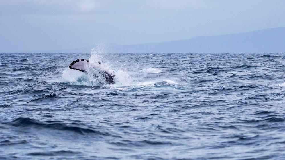 Whales - 11.jpg