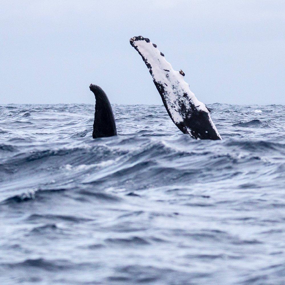 Whales - 12.jpg