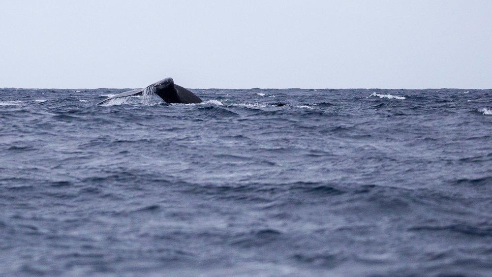 Whales - 15.jpg