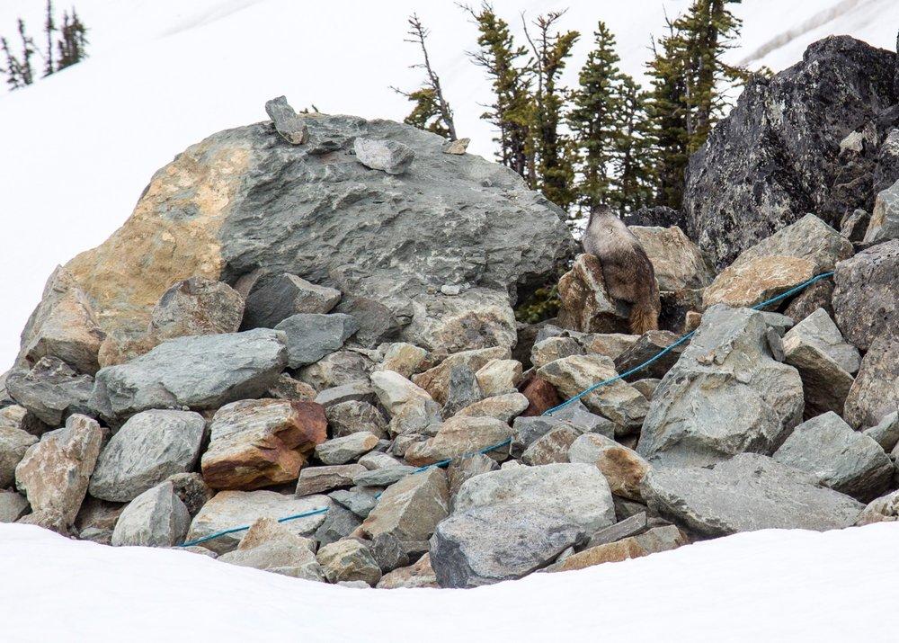 Whistler Half Marathon - 11.jpg