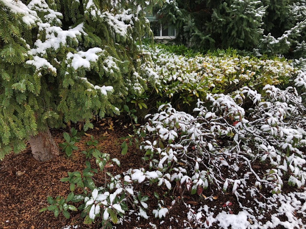 It wasn't much, but there should not be snow on the ground in Vancouver in early November.