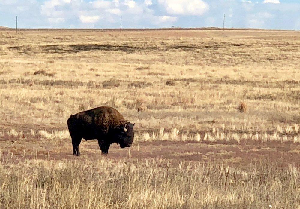 Rocky Mountain Arsenal - National Wildlife Refuge, November 17, 2017