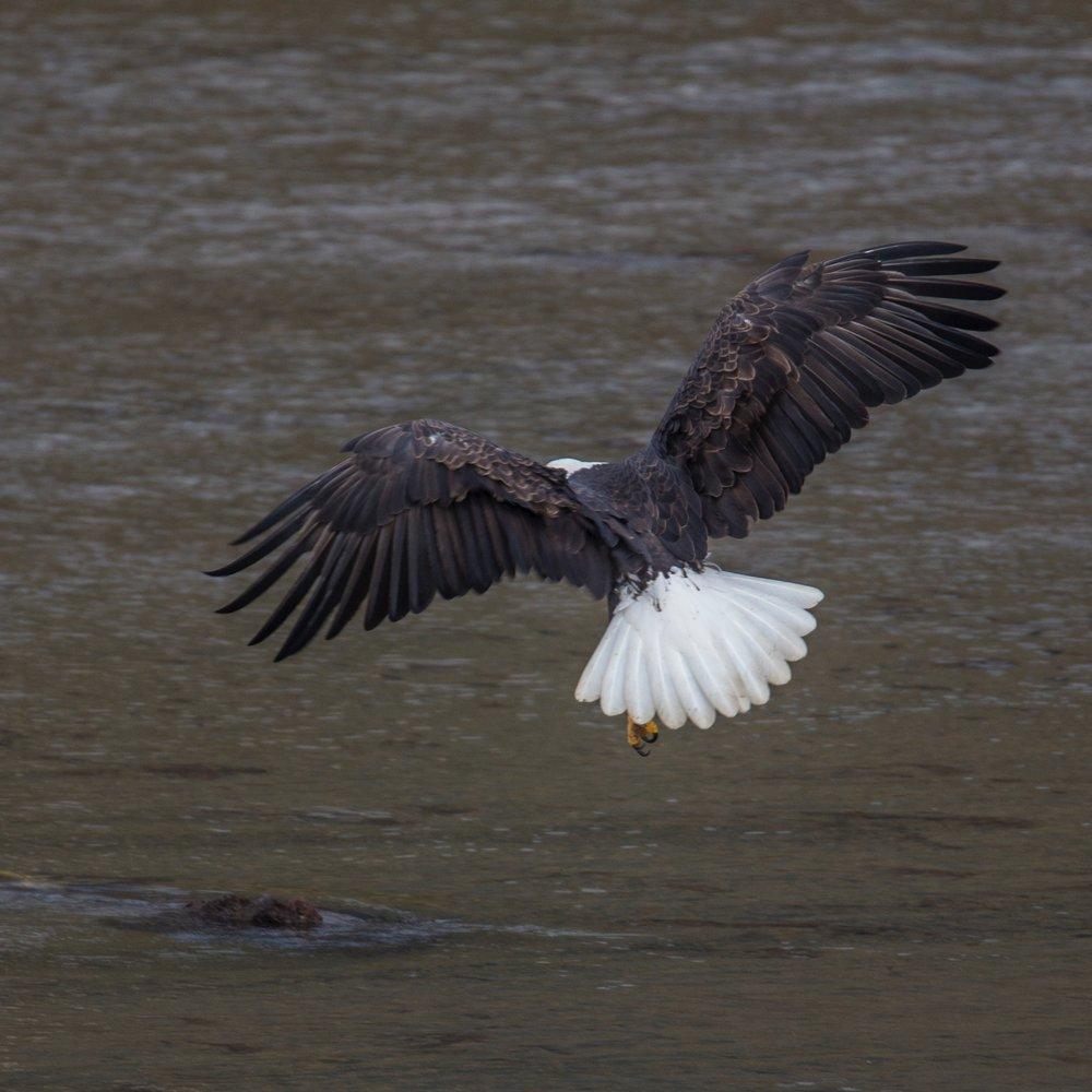 Eagles - 3.jpg