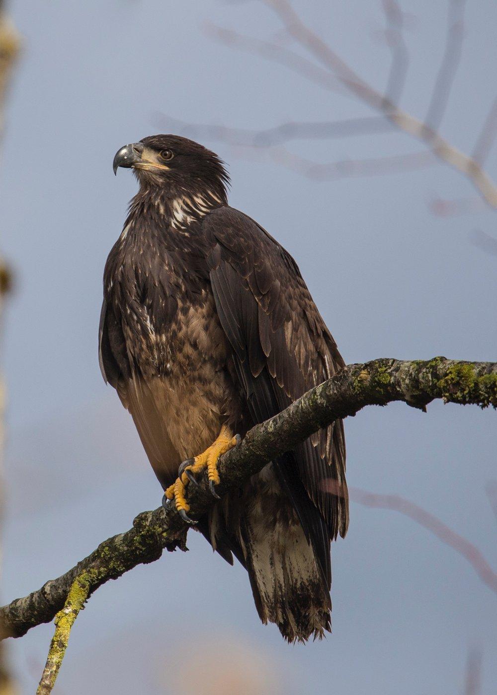 Eagles - 12.jpg