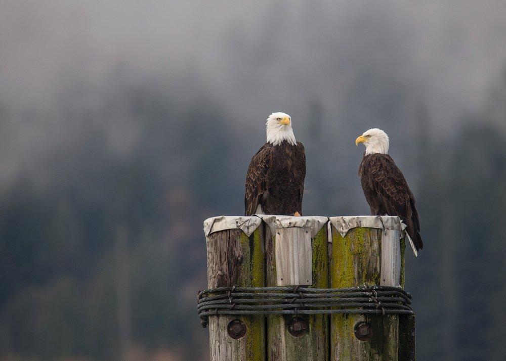 Eagles - 21.jpg