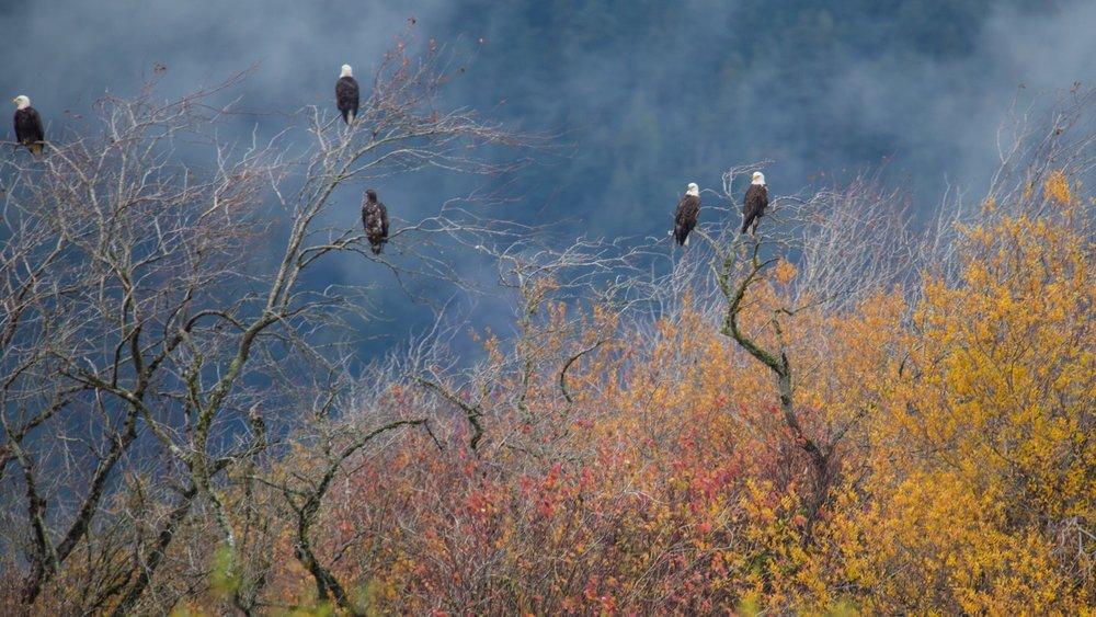 Eagles - 23.jpg