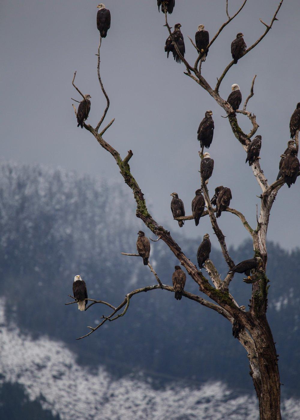 Eagles - 24.jpg