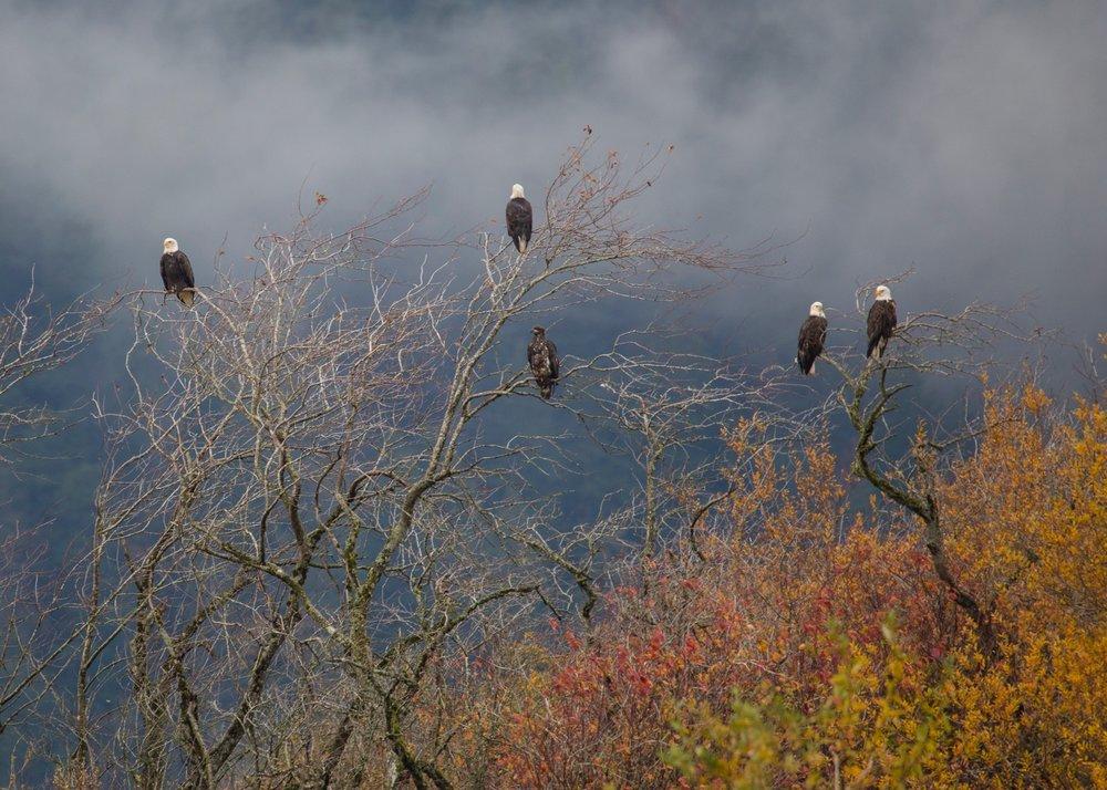 Eagles - 26.jpg