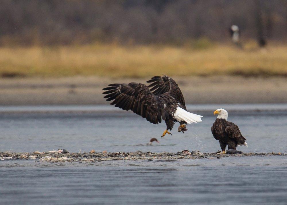 Eagles - 27.jpg
