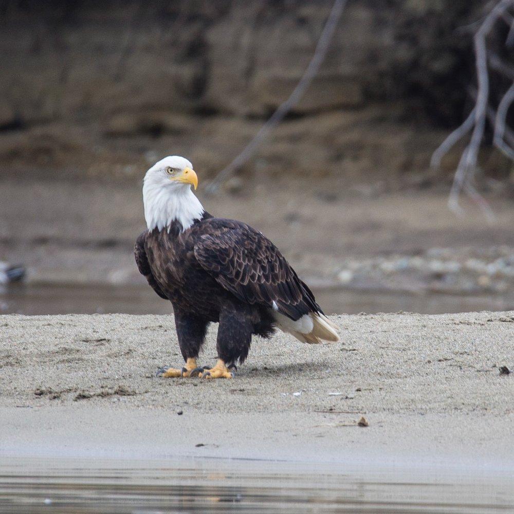 Eagles - 36.jpg