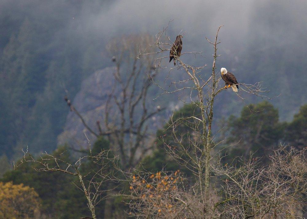 Eagles - 38.jpg