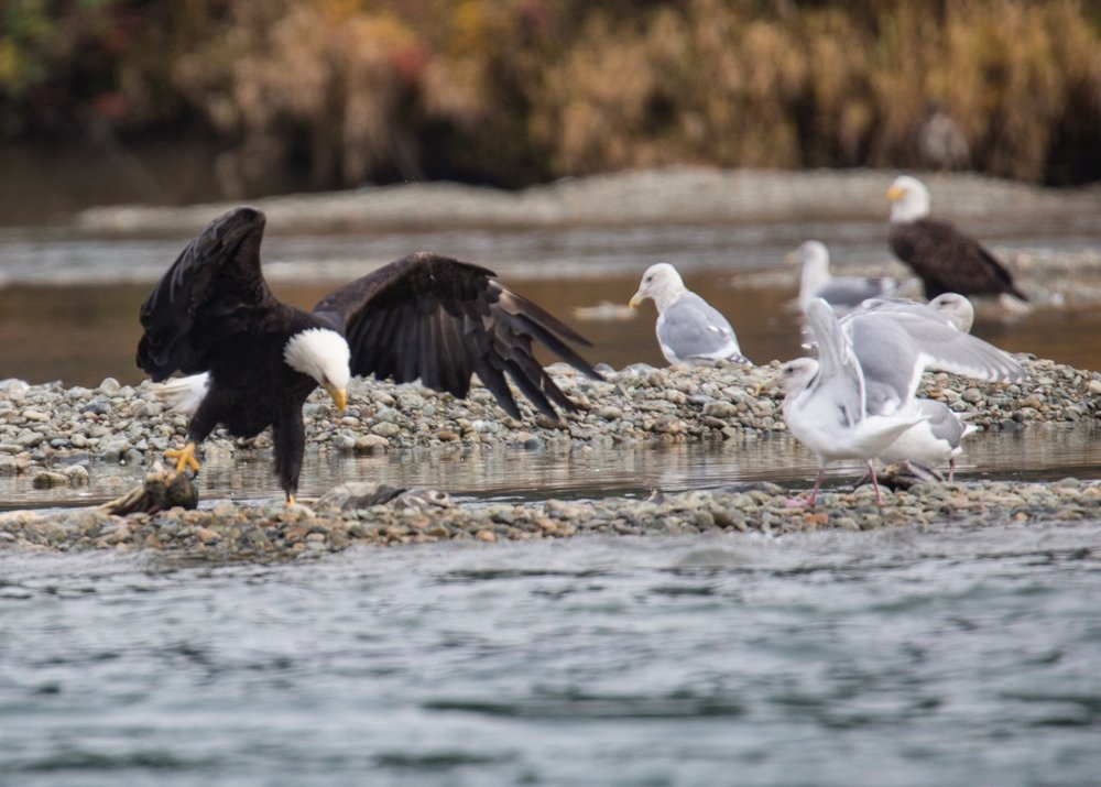 Eagles - 39.jpg
