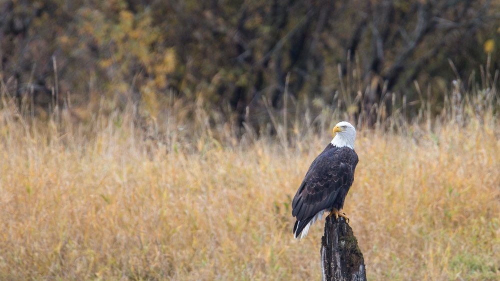 Eagles - 43.jpg