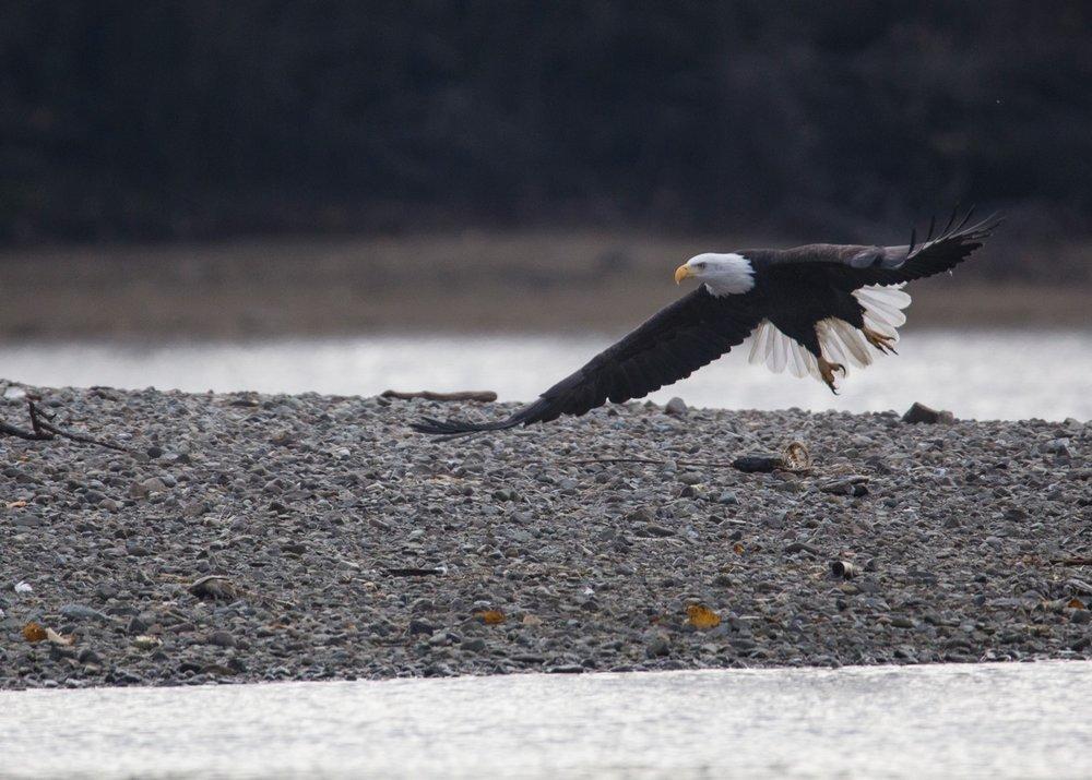 Eagles - 54.jpg
