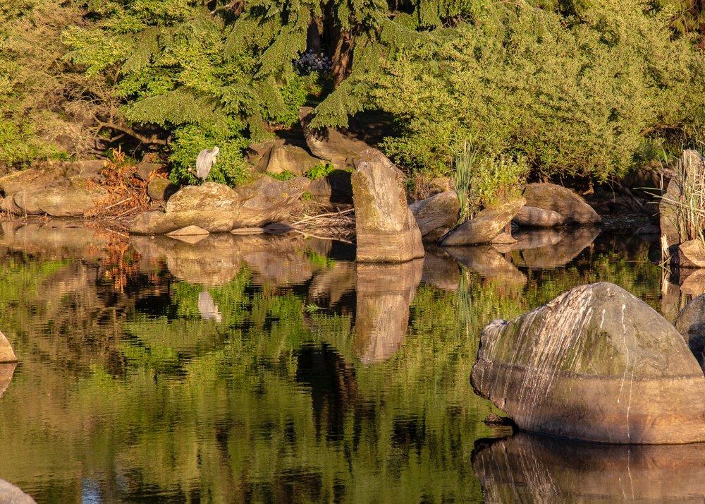 Urban Beavers - 3.jpg