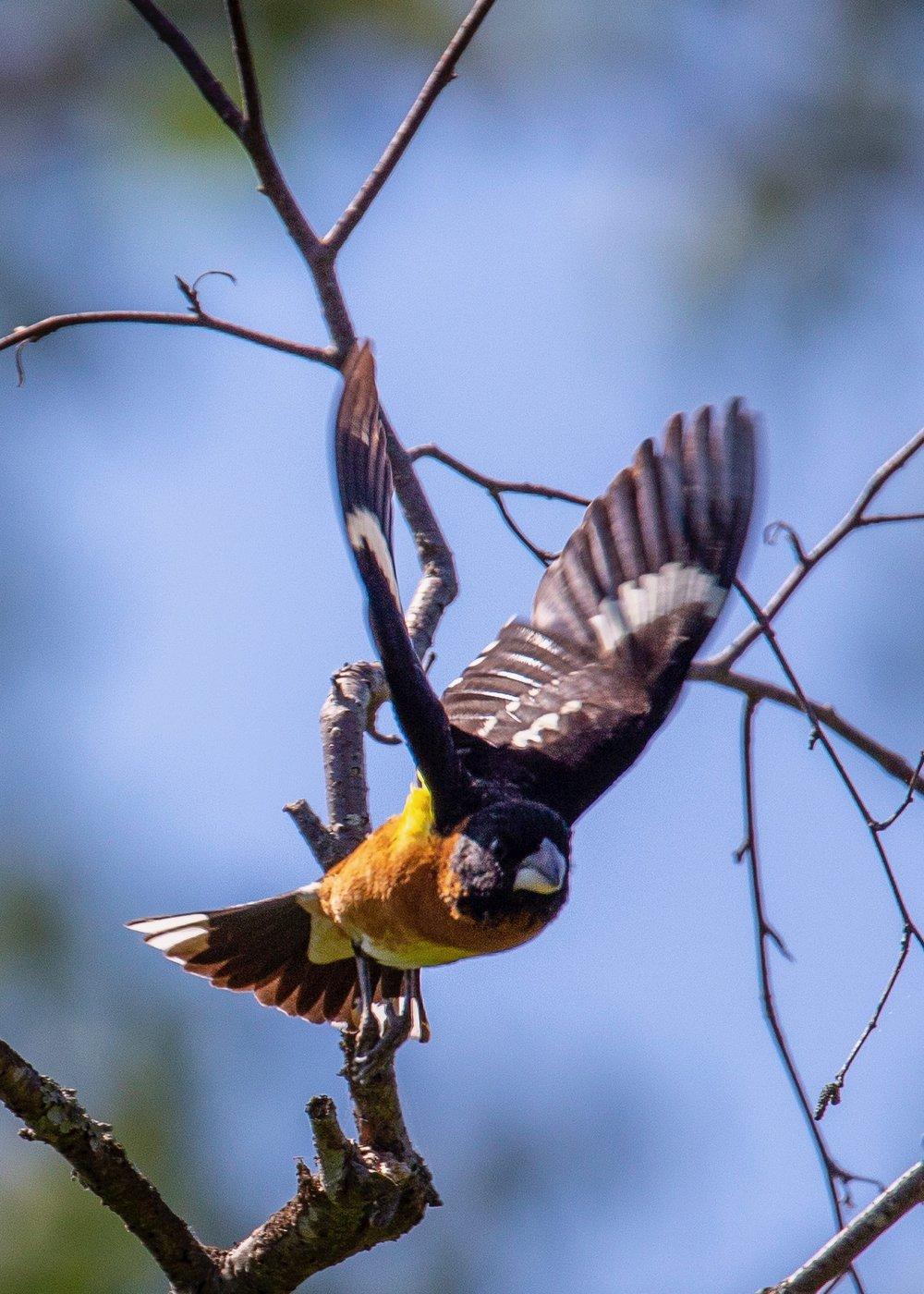 Reifeil Hummingbirds - 23.jpg