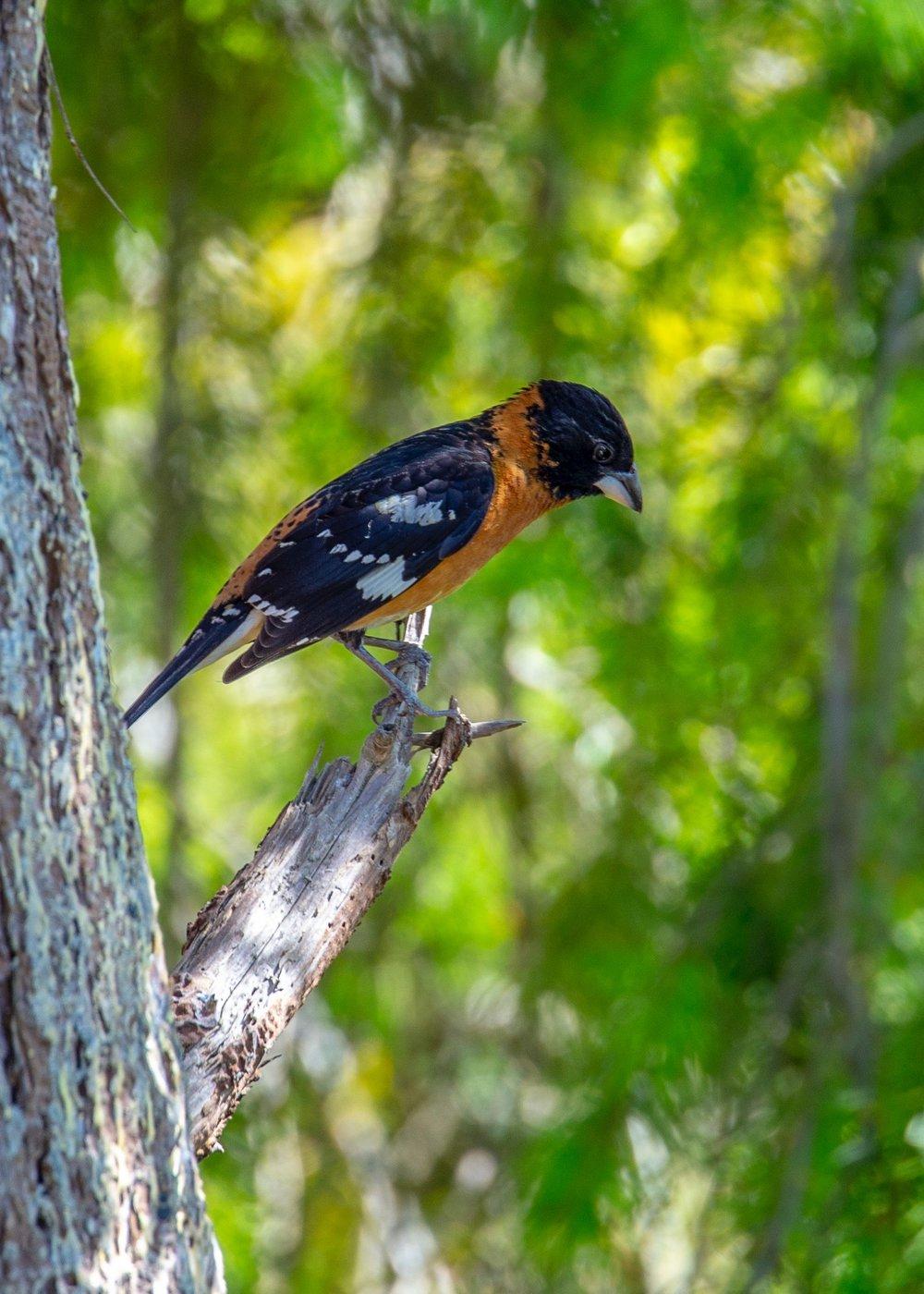 Reifeil Hummingbirds - 24.jpg