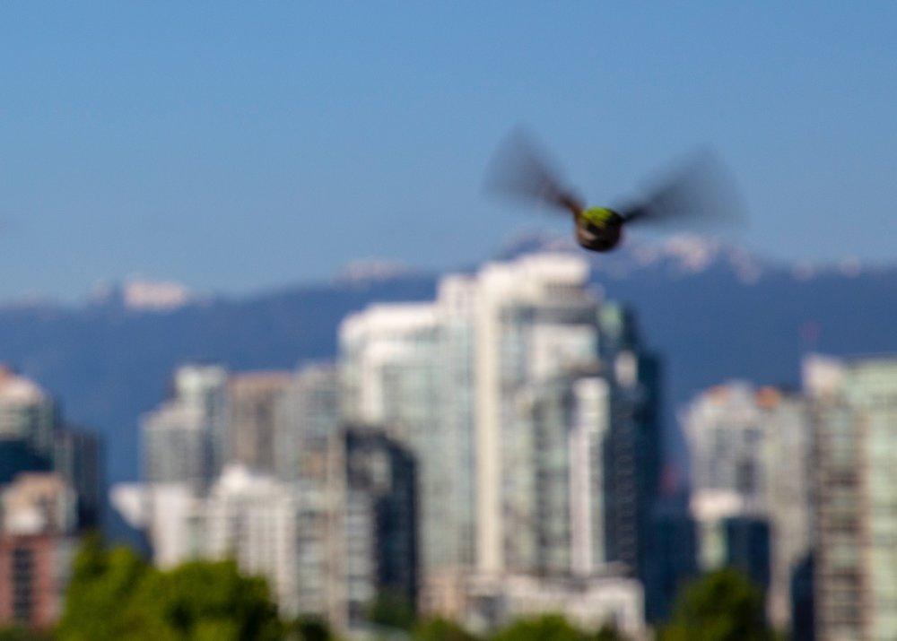 Reifeil Hummingbirds - 29.jpg