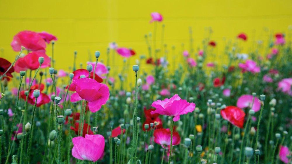Vancouver Wildflowers - 10.jpg