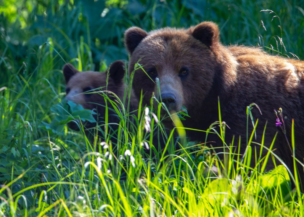 My best shot of the day - momma and cub.