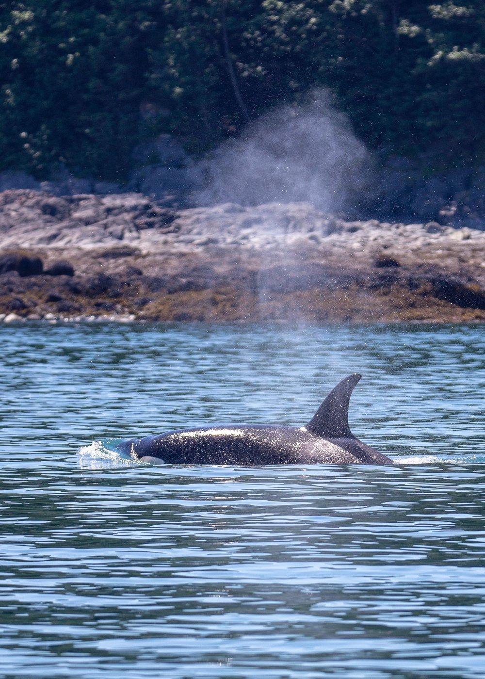 Juneau Alaska - 24.jpg
