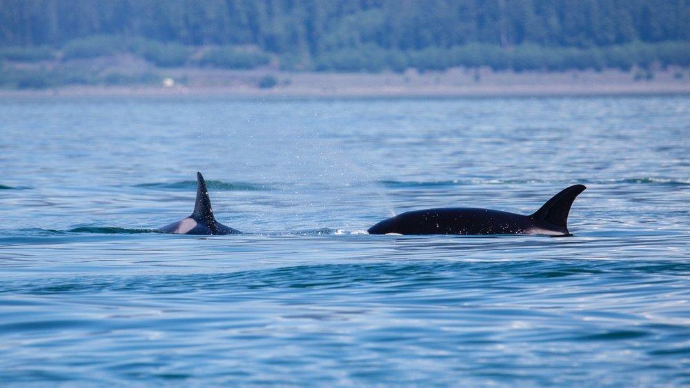 Juneau Alaska - 34.jpg