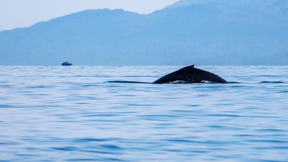 Juneau Alaska - 43.jpg