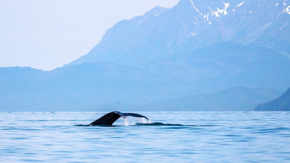 Juneau Alaska - 44.jpg
