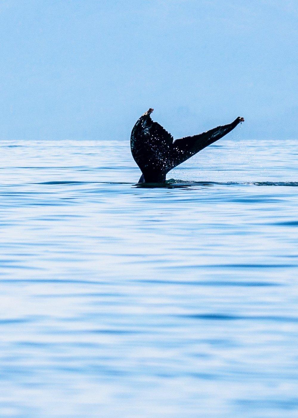 Juneau Alaska - 45.jpg