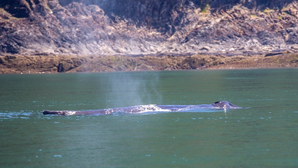 I think this one is cool - you can really see the blowhole as he drifted along the surface.
