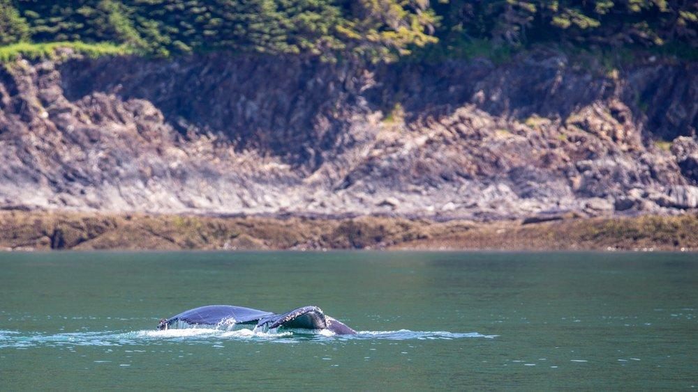 Juneau Alaska - 52.jpg