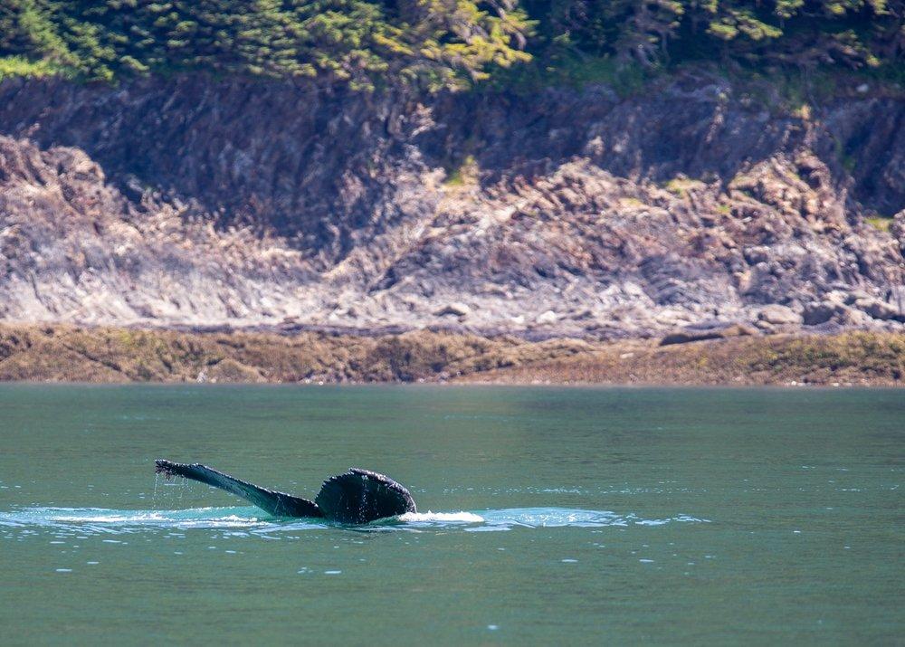Juneau Alaska - 53.jpg