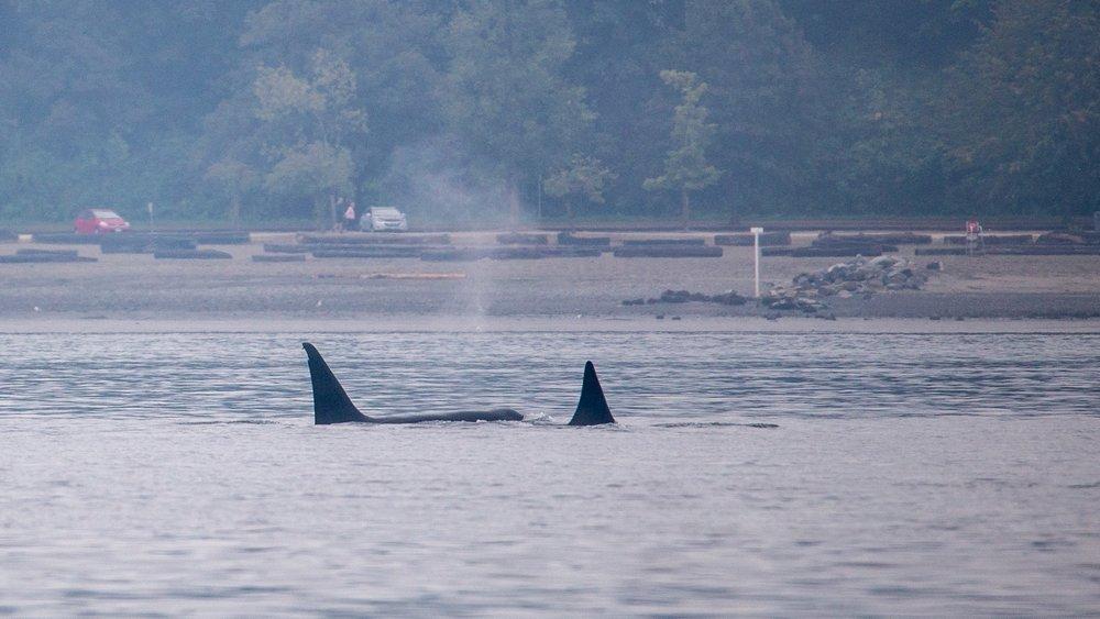 Whale Watching - 4.jpg