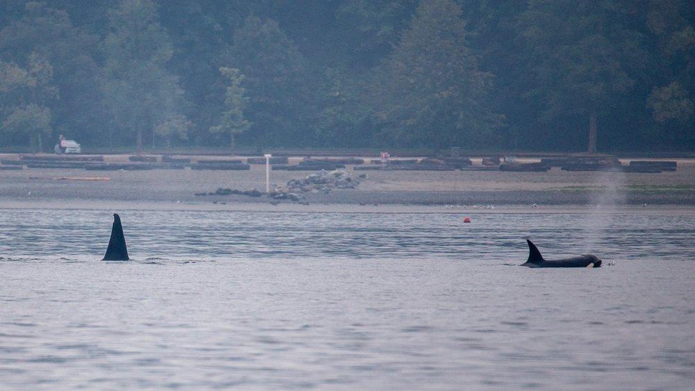 Whale Watching - 5.jpg