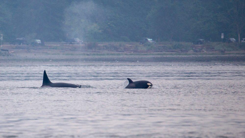 Whale Watching - 9.jpg