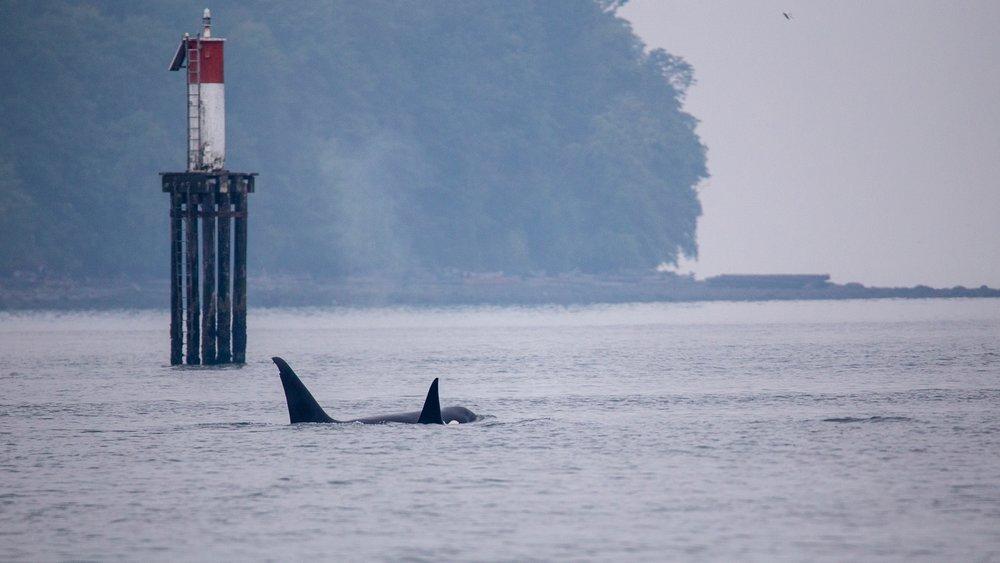 Whale Watching - 12.jpg
