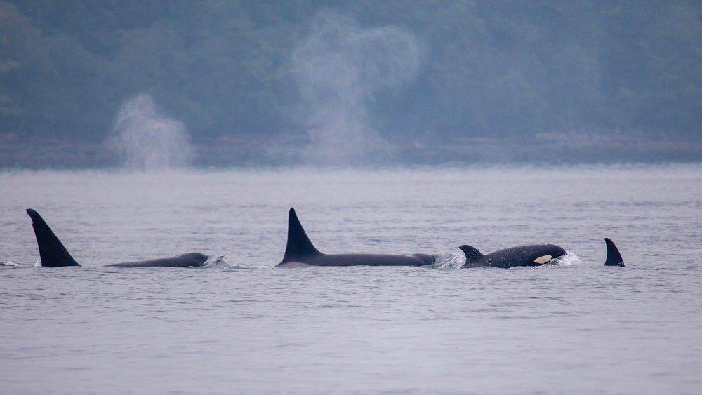 Whale Watching - 11.jpg