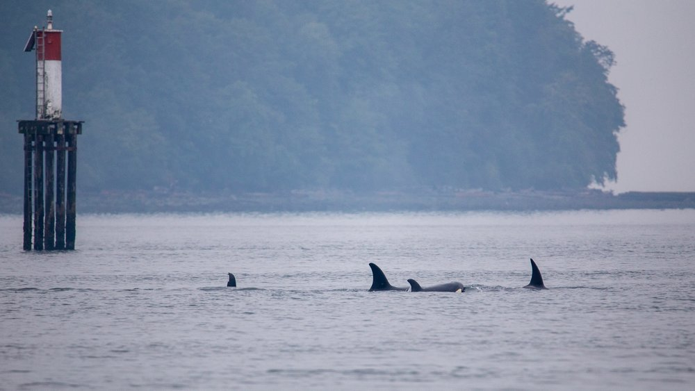 Whale Watching - 15.jpg
