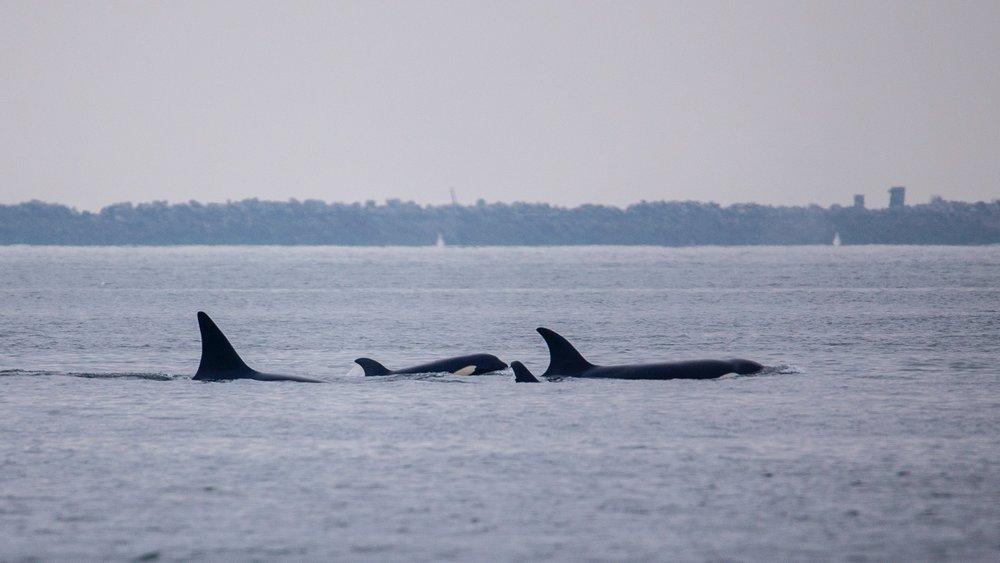 Whale Watching - 20.jpg