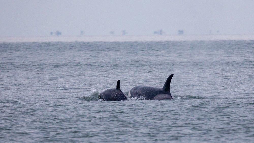 Whale Watching - 21.jpg