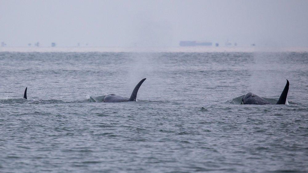 Whale Watching - 22.jpg