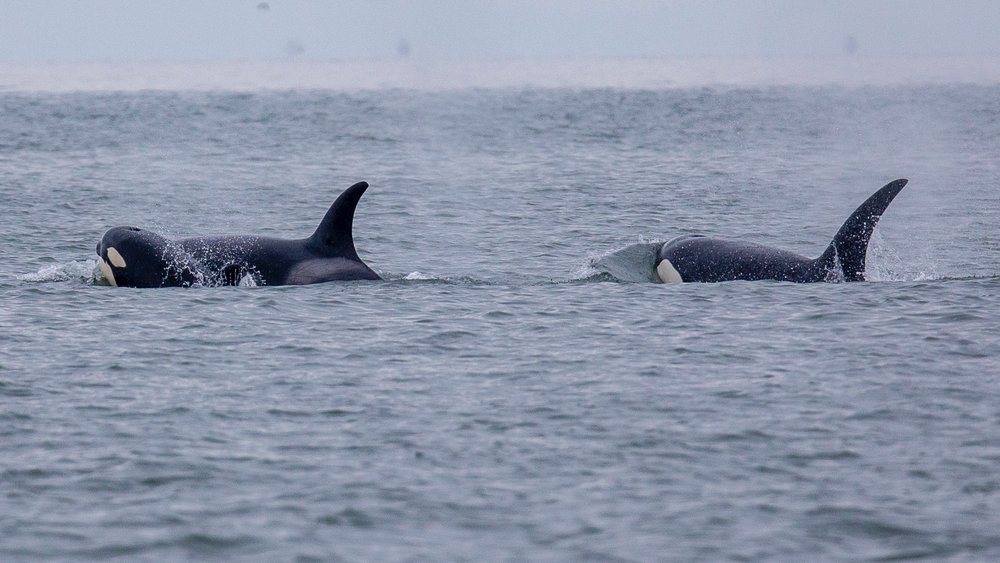 Whale Watching - 24.jpg
