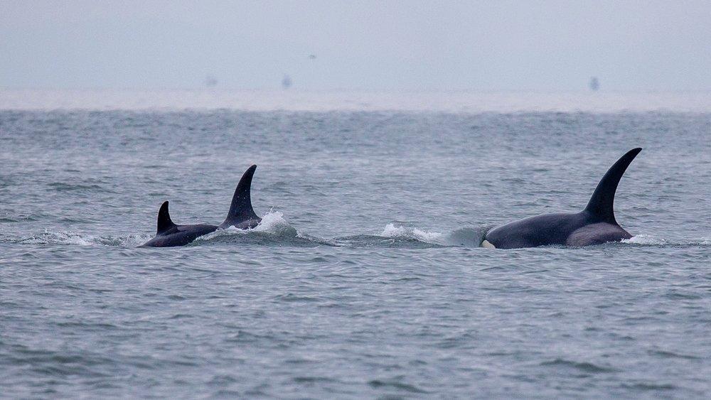 Whale Watching - 25.jpg
