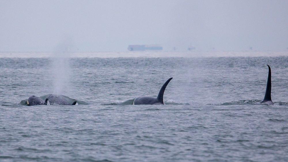 Whale Watching - 26.jpg