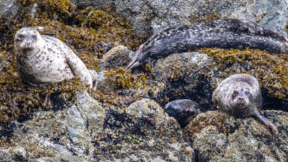 Whale Watching - 29.jpg