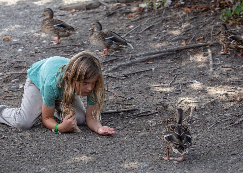 Stalking the ducks...