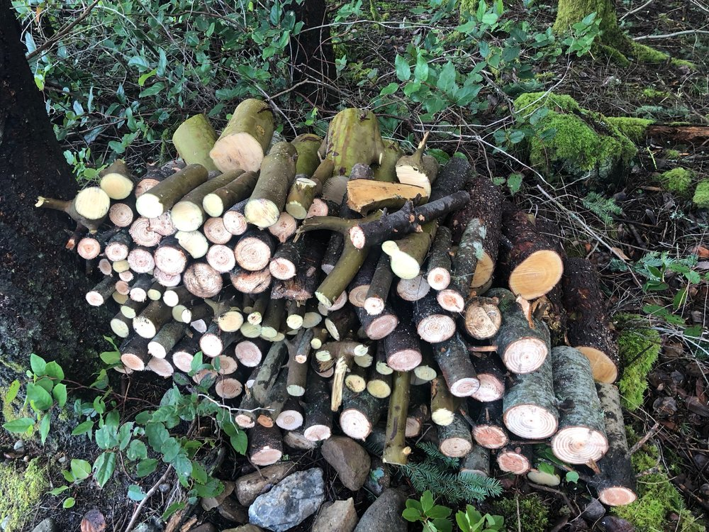 The start to our firewood pile.