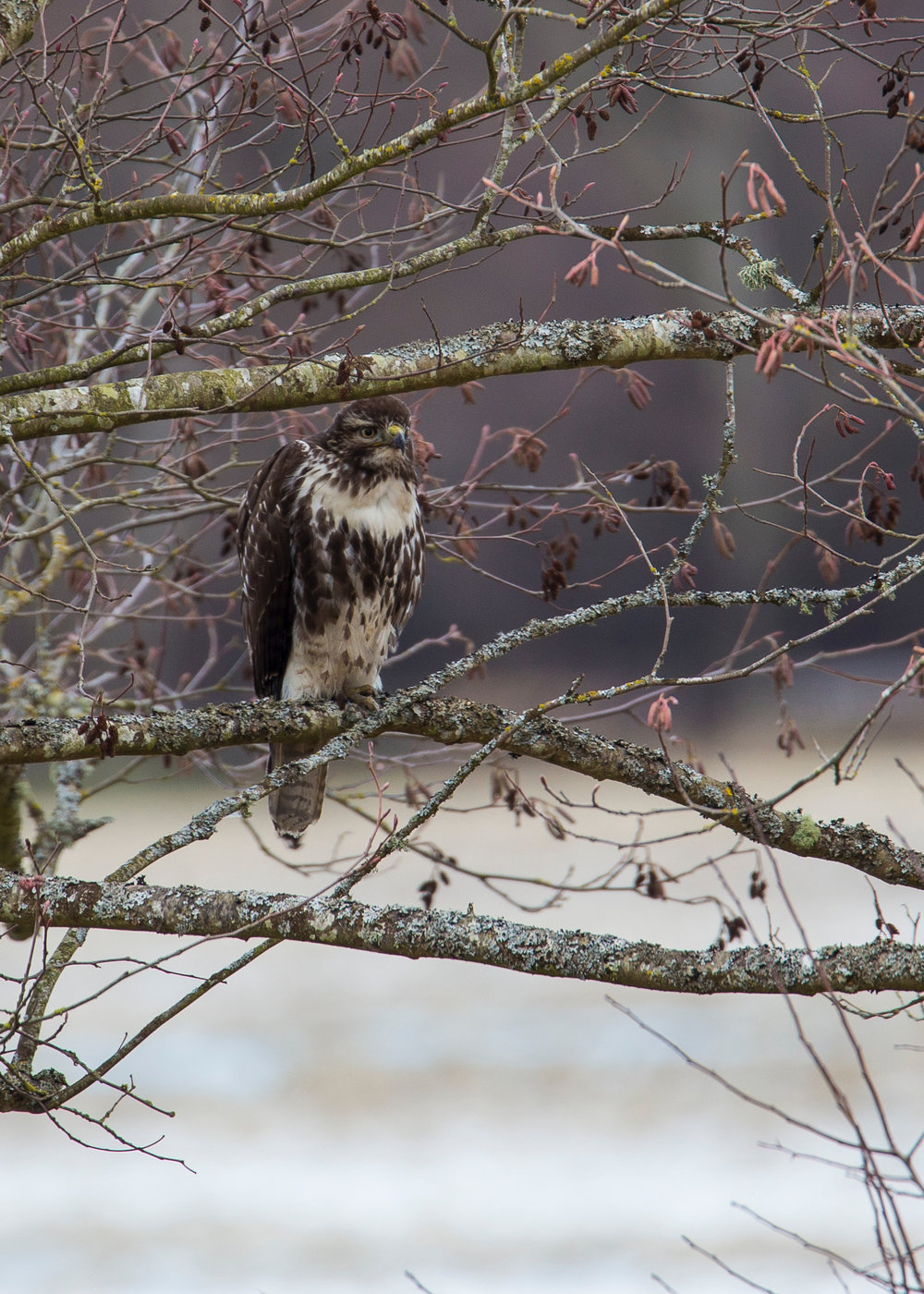 As we were headed out, we spotted a second red-tailed hawk along the water.