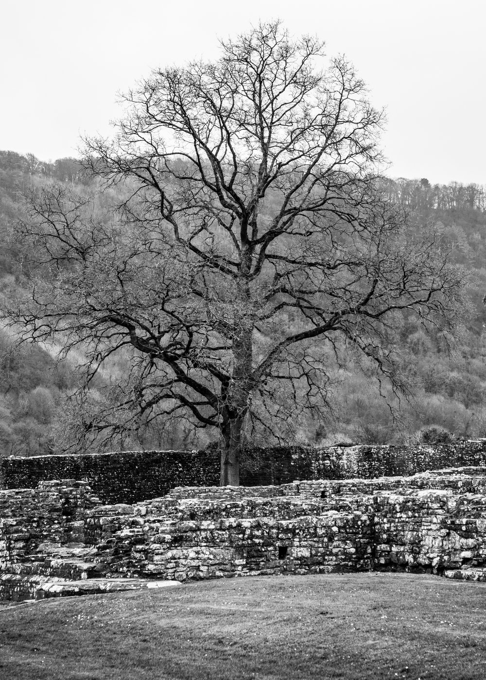 As you probably noticed, this tree captured my imagination a number of times.