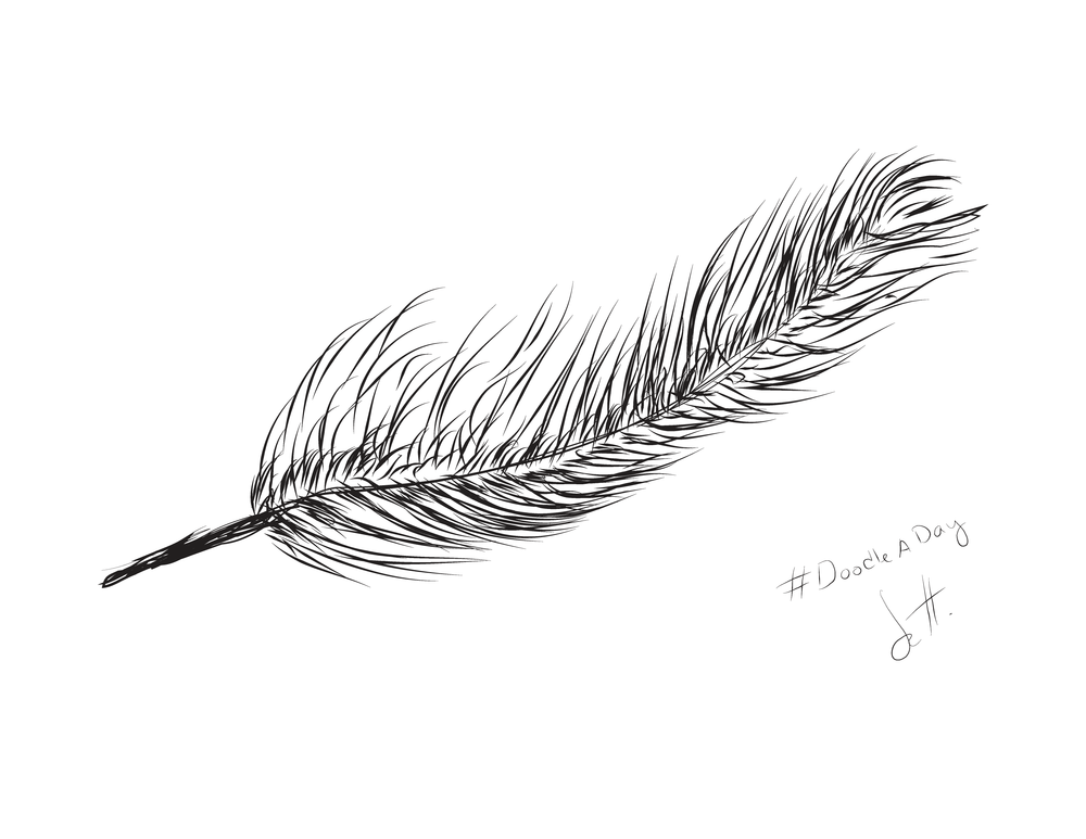 A simple hand drawn feather